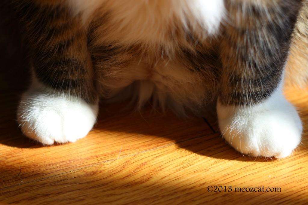 mooz feet 021013